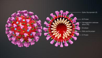 Photo of Medicina. L'epidemia Covid-19 tra un'ondata e l'altra