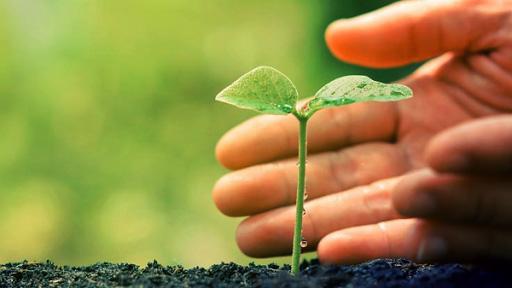scienza - pianta meno clorofilla
